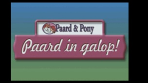 Paard and Pony Paard in Galop